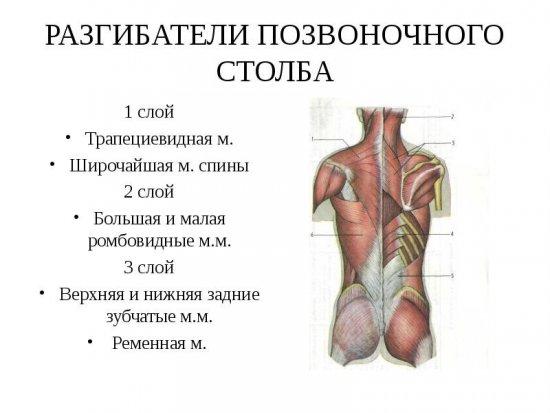 fájdalom a vállízületekben és a hát alsó részén