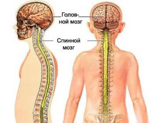 gerincvelő derékközi csontritkulása artrózisa