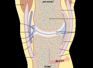 gerincvelői csontok ízületi áttekintése