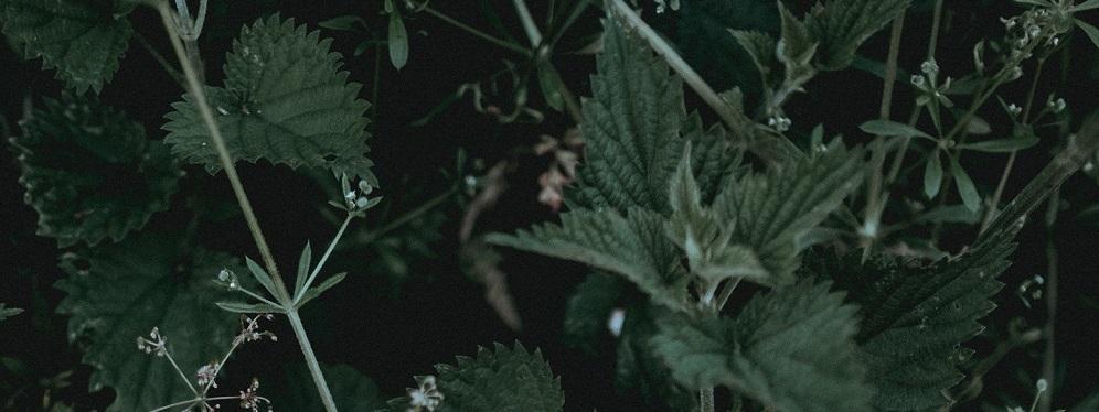 gyógyító gyógynövények együttes kezelése)