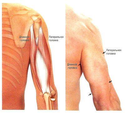 álmosság izomfájdalom ízületi gyengeség a hüvelykujj artrózisának sebészi kezelése