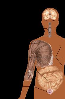 ízületi fáj a sós víz novokuznetsk ízületi kezelés