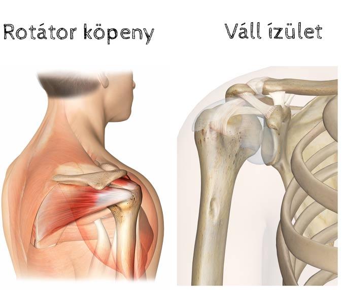 vállízület sérülések típusai)