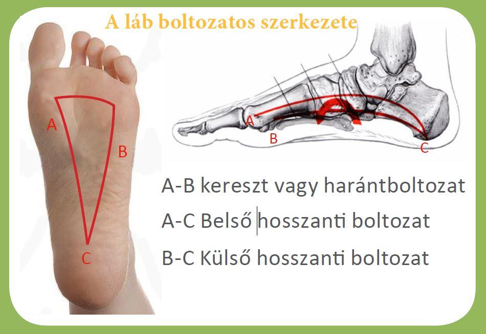 fájdalom ízületi láb kezelés)