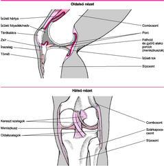 ízületi csontok fertőző betegségei)
