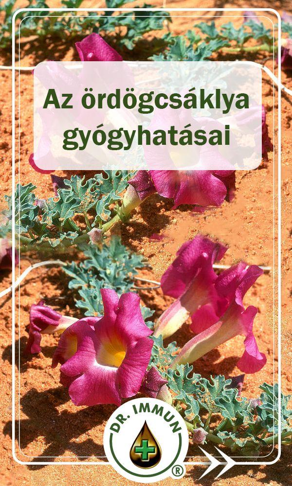 izületi gyulladás gyógyítása gyógynövényekkel