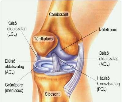 a térdszinovitis medialis meniszkuszának károsodása)