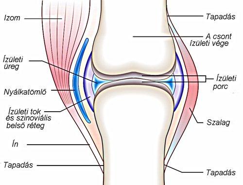 ízületi és csontfájdalomcsillapítás a térd ízületi gyulladásának sós kezelése